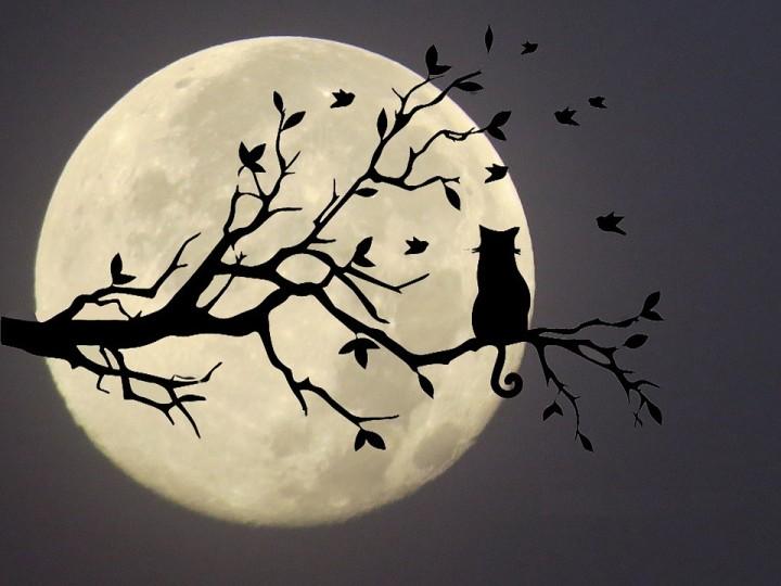 Eclipses de Setembro - Lua Nova em Virgem - Lua Cheia em Peixes