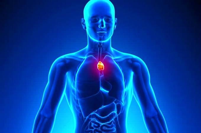 SIGNOS E SAÚDE - Quais órgão rege o seu signo e como cuidar melhor da sua saúde